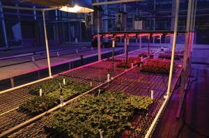 LED Lighting and cuttings