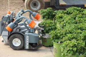 Harvest Automation's pot-moving robots
