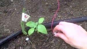 Plantduino greenhouse using Arduino