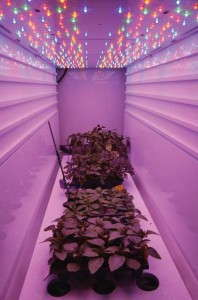Figure 2. LED modules were constructed for research at Michigan State University to investigate how different colors of light influenced growth of bedding plant seedlings. Photo courtesy of Osram Opto Semiconductors.