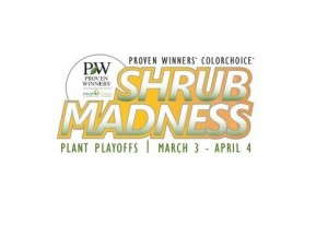 Proven Winners ColorChoice Shrub Madness