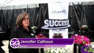 Benary Launches Success Series Petunias