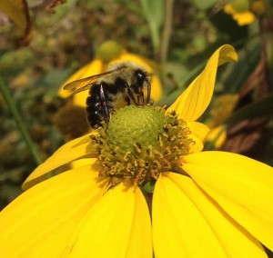 Bee Pollination, Abiotic - Zack Brubaker