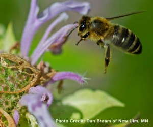 Pollinator Month