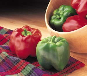 Sweet Bell Pepper Crusader (Syngenta)