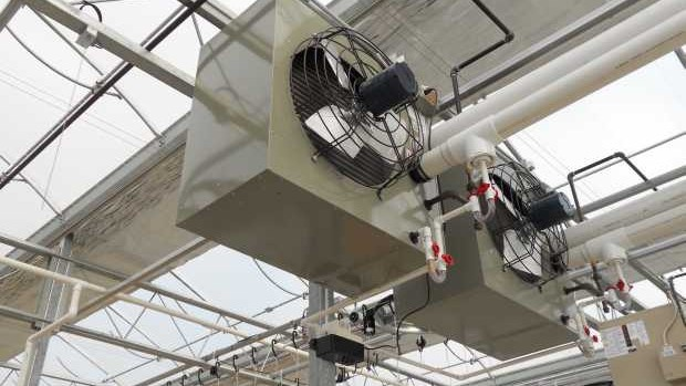 Growers are looking for low-cost options for temperature control, like circulating fans and exhaust fans.