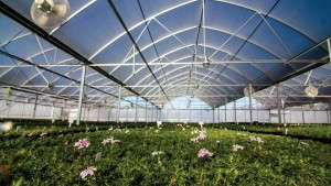 Emerald Coast Grower's Atlas Greenhouse