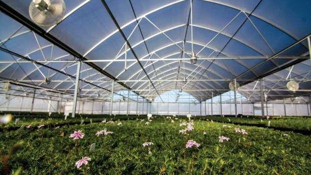 Emerald Coast Grower's Atlas Greenhouse
