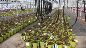 NFF_Bailey_greenhouses