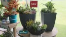 HGTV HOME Plant Collection_pre-made succulent container
