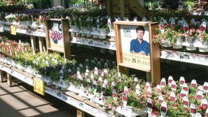 Four Star Greenhouse Proven Winner Plants At English Garden