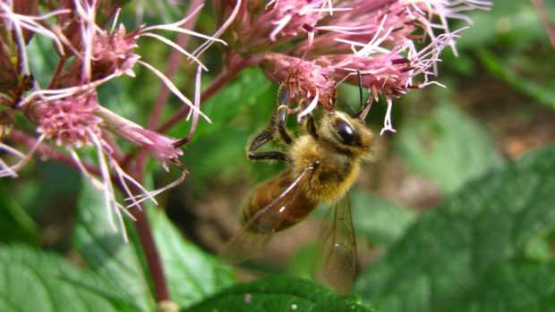 Pollinator-Conference-NC State