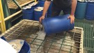 Bob's Market and Greenhouses' Ron Morris pours Stockosorb into the hopper for distribution on the conveyor line