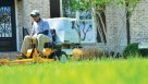 More and more people are employing a landscape service, but that doesn't mean they don't still garden