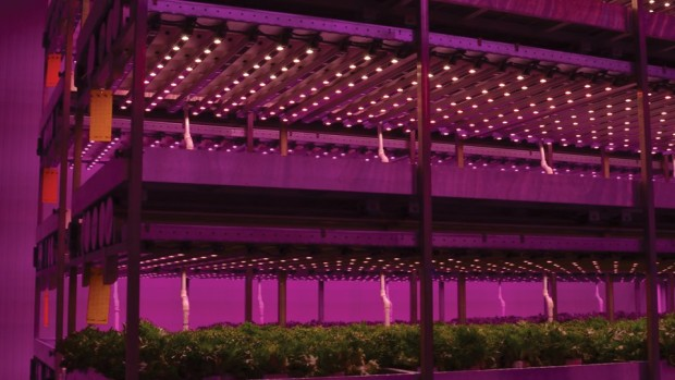 Figure 3. Sole-source lighting in a multi-layer vertical growing system utilizing hydroponics for vegetable production.
