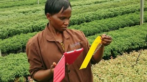 Florensis Kenya has developed a scouting app, which provides near real-time data from the field and makes crop protection interventions even more effective, says Robbert Hamer