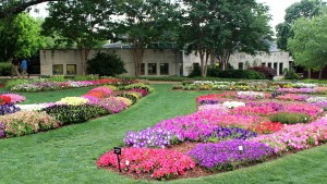 2015 Trial beds at the Dallas Arboretum (2015 Dallas Arboretum Field Trials)