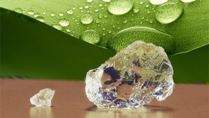 Stockosorb Crystals_with water Agriculture leaf (Evonick)