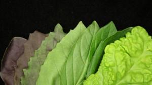 Figure 2. Basil Leaves