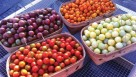 To offer consumers an attractive crop, Local Appetite uses high tunnels to grow cherry tomatoes