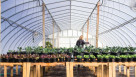 Sustane Research Greenhouse 2015