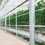 Vegetable and Hydroponic Production At Vineland