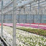 Biocontrols in a Greenhouse