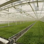Little-Leaf-Farms-New-Greenhouse