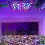 Osram's Phytofy RL lighting system