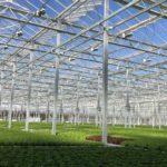 Inside Gotham Greens' Pullman greenhouse