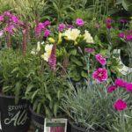 Perennial plants display at retail