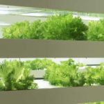 Vertical Farming Webinar